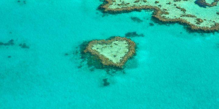 L'Australie va investir 500 millions de dollars pour restaurer la Grande Barrière de corail
