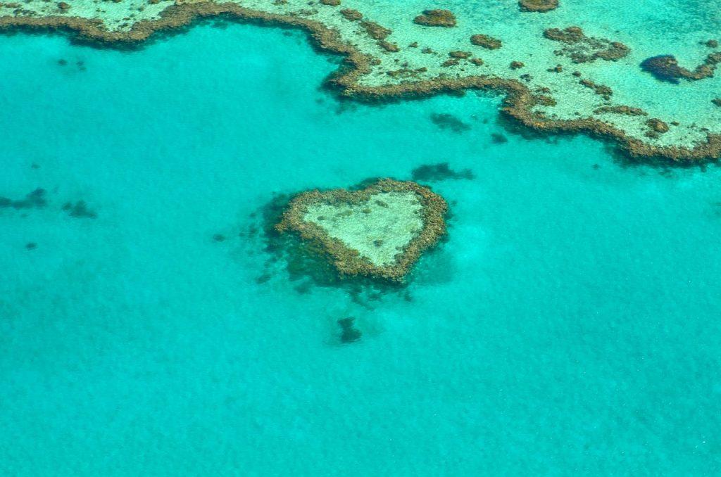 restauration-baririere-corail-australie